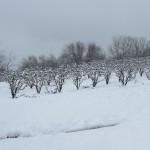 photo 2013-01-15_13